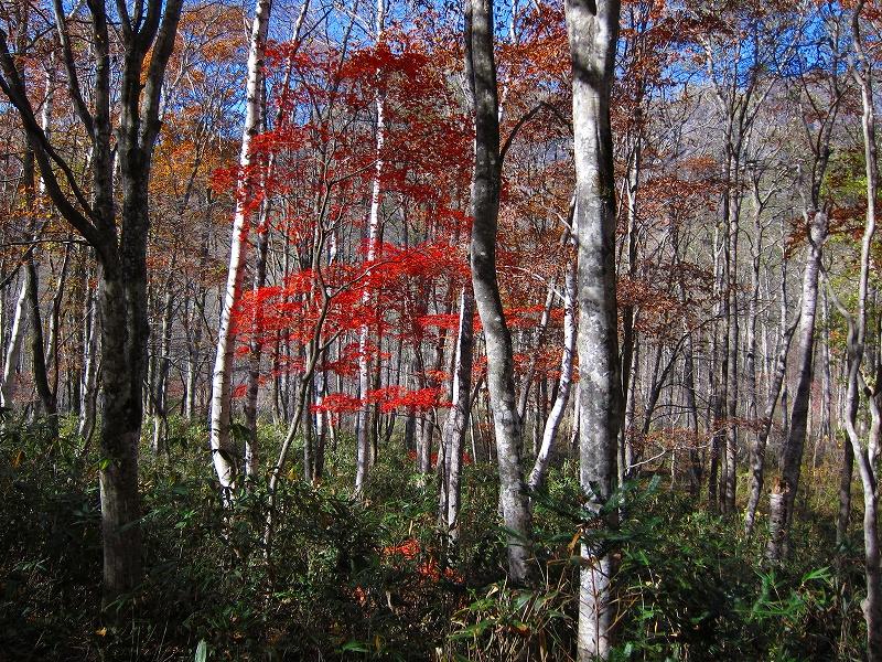 2011 10 19 戸隠紅葉の森