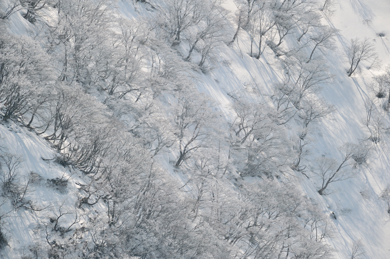 _DSC2758_残雪