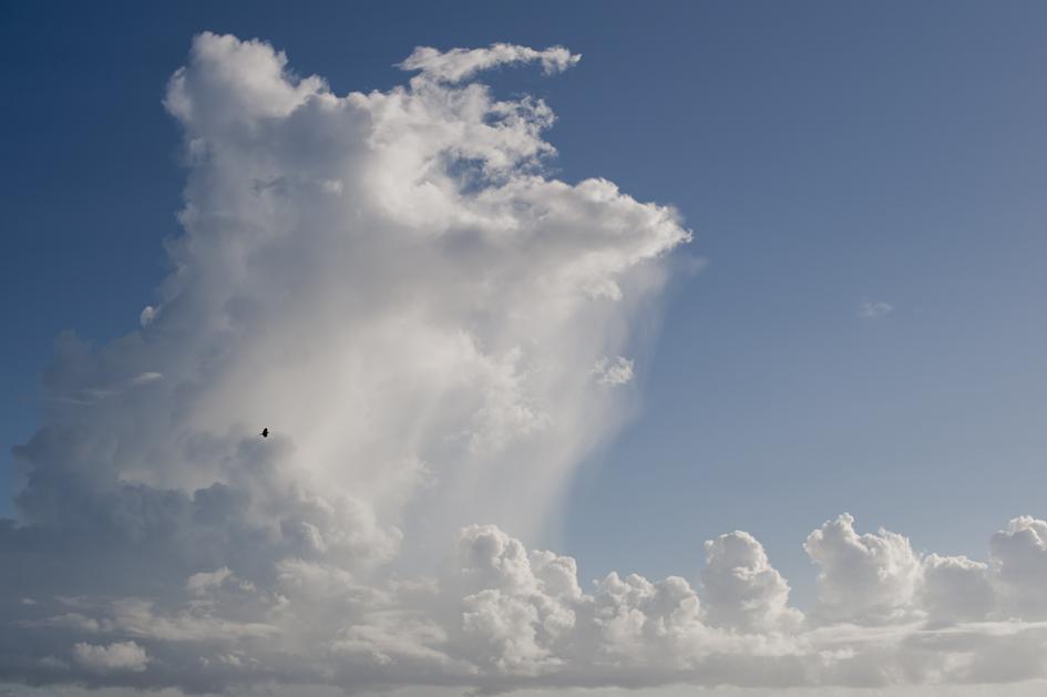 _DSC1052_雲とイソヒヨドリ