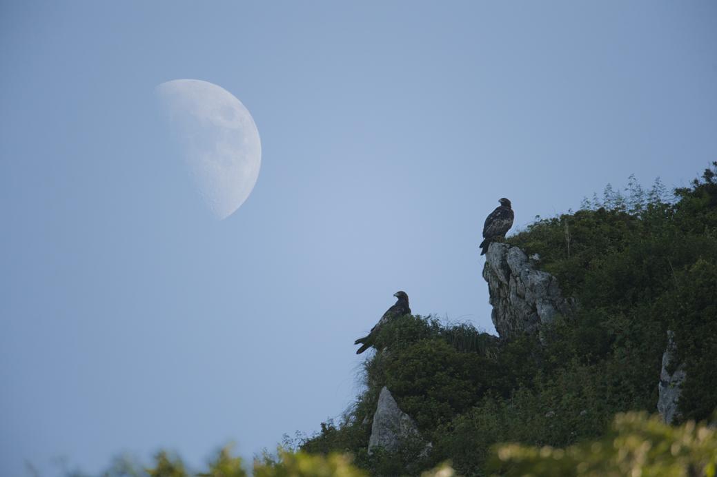 _DSC0571_moon