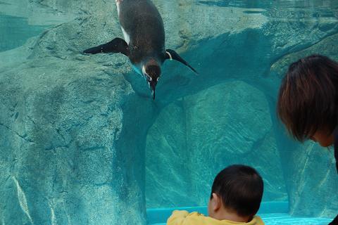 20100429ペンギン2