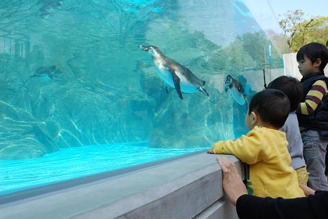 20100429ペンギン3
