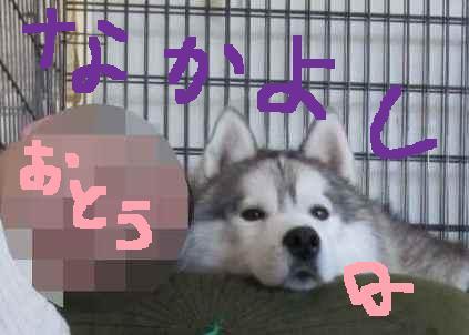 11-12-19-2Qちゃん