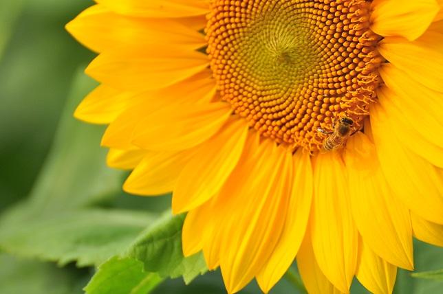 季節はずれの花々(2)