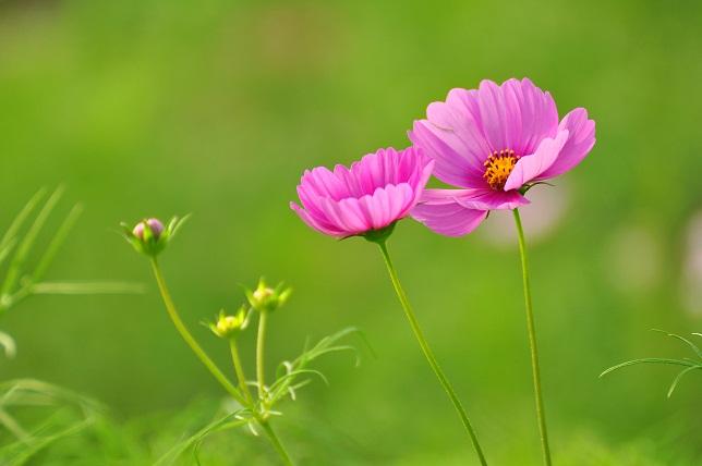 季節はずれの花々(1)