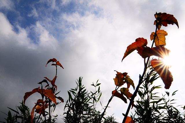 秋の名残(2)