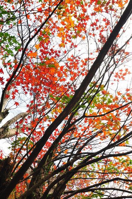 南国の遅い秋(3)