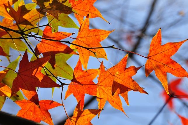 南国の遅い秋(1)