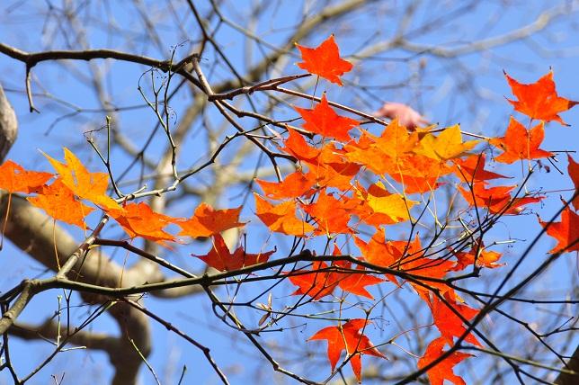 南国の遅い秋(2)