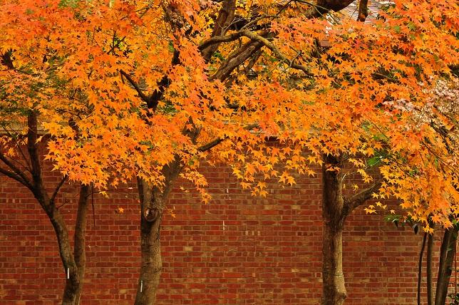 秋の主役はまだ健在なり(2)