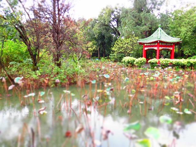 冬の蓮池(1)