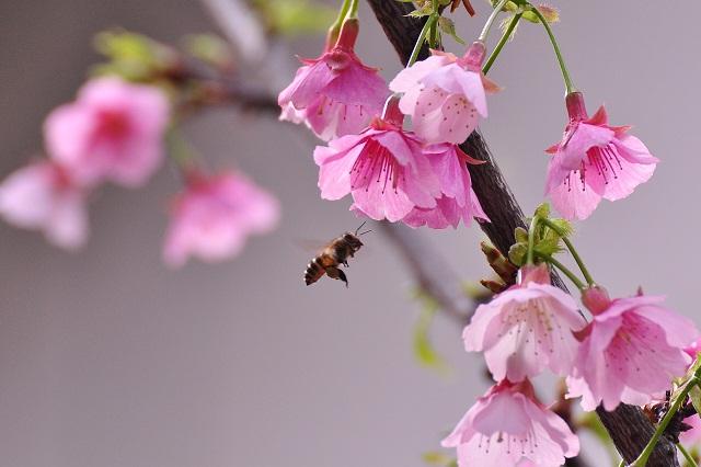 一足早い春の訪れ(2)