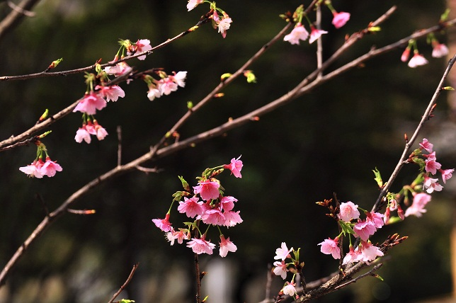 一足早い春の訪れ(1)