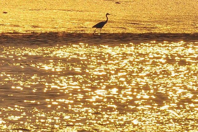 黄昏時の河川敷