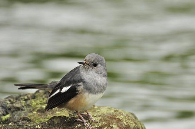 愛くるしい小鳥(2)