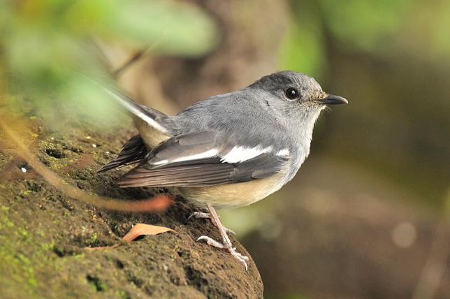 愛くるしい小鳥(3)