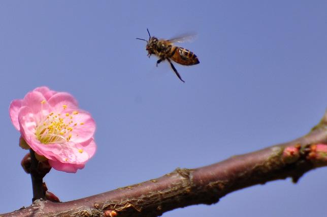 春うらら(5)