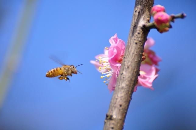 春うらら(4)