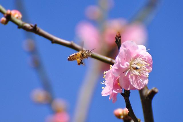 春うらら(3)