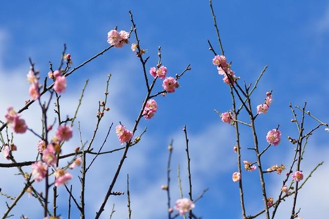 春うらら(1)
