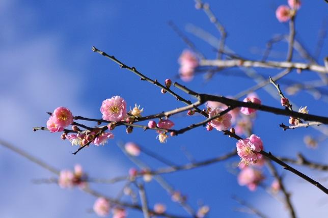 春うらら(2)