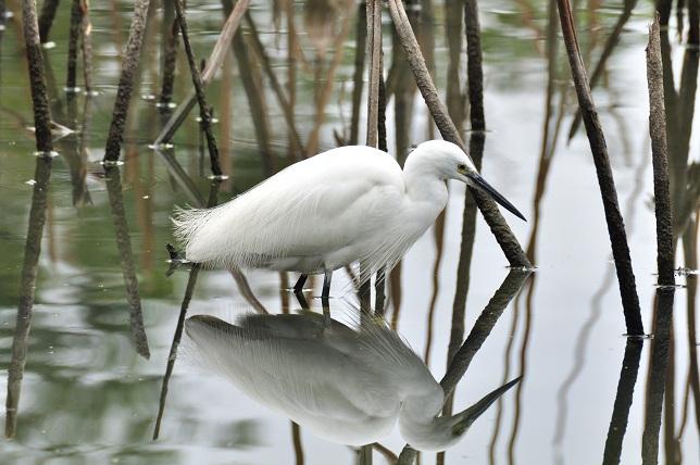 冬枯れの池に佇む