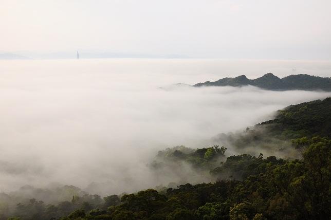 霧のベール(1)
