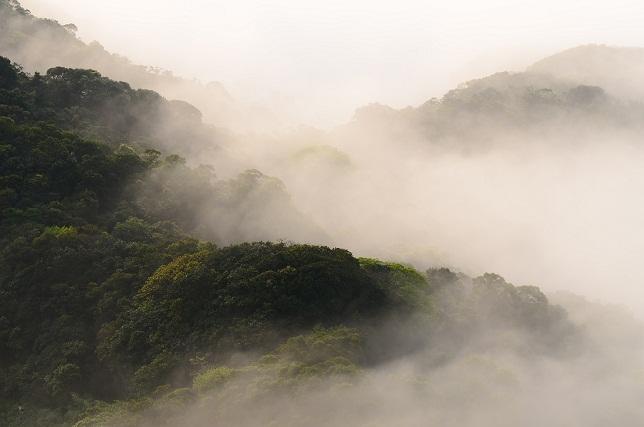霧のベール(4)