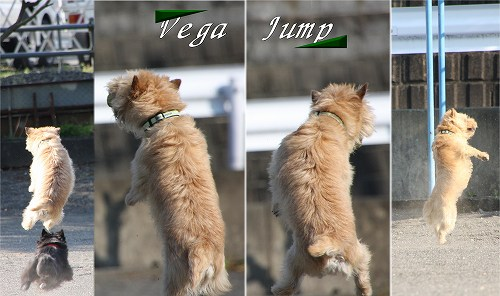Vega Jump20100502