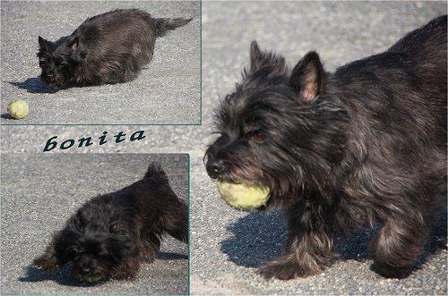 bonita20100502.jpg