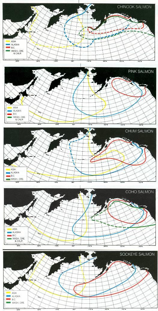 salmon route