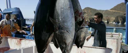 r-FUKUSHIMA-FISH-CONTAMINATION-large570.jpg