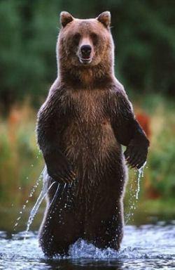 standing-bear2-small.jpg