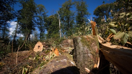 trans-mountain-burnaby-moutain-tree-removal-sept-10-2014.jpg