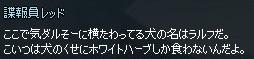mabinogi_2014_11_16_010.jpg