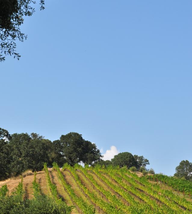 Saracina Ranch Winery-07