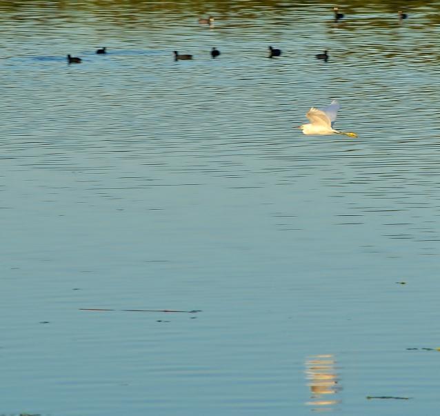 Lake Machado -03