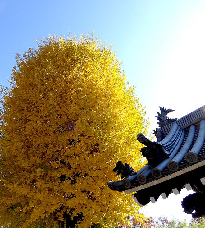 tree141130_02.jpg