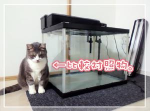 new水槽02