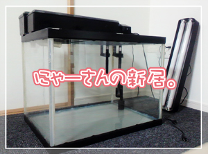 new水槽01