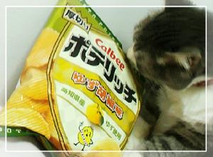 ポテリッチ-柚子胡椒
