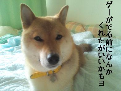 d96_20110916112524.jpg