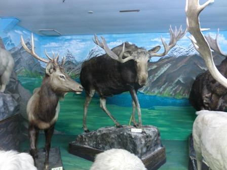 つやま自然の不思議館 (2)