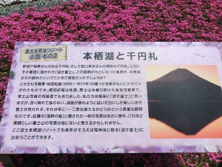 富士芝桜まつり (2)