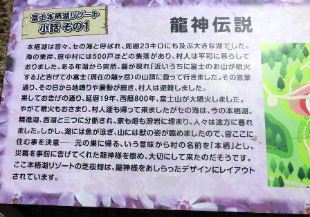 富士芝桜まつり (6)