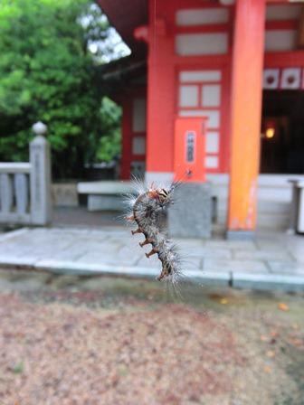 忌宮神社 (16)