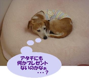 11_08_08_01.jpg