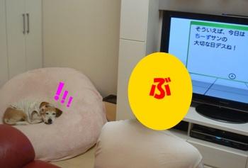 11_08_08_04.jpg