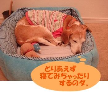 11_09_21_01.jpg