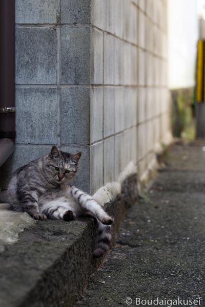 猫の島・相島 03
